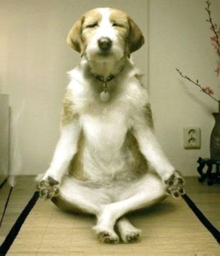 Thiền! Đừng làm phiền!