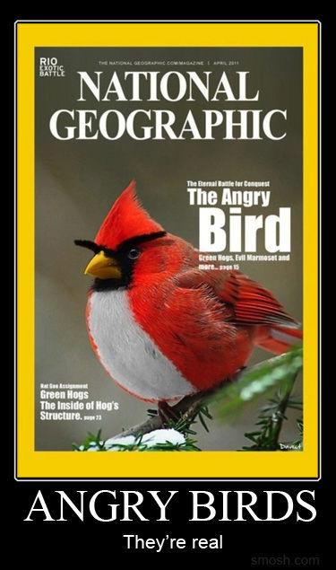 Angry Bird nè